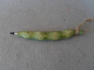 Grönsakspenna/böna